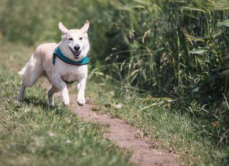 Pierwszy spacer z psem