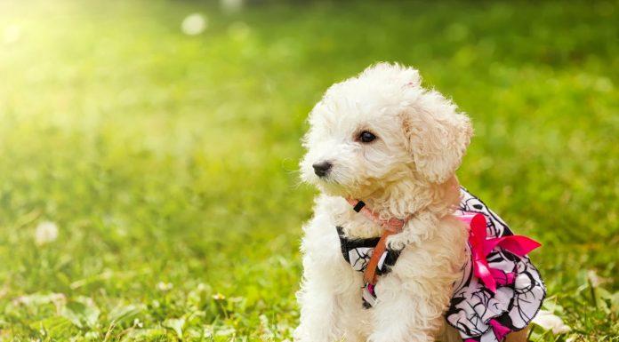Wychowanie psa
